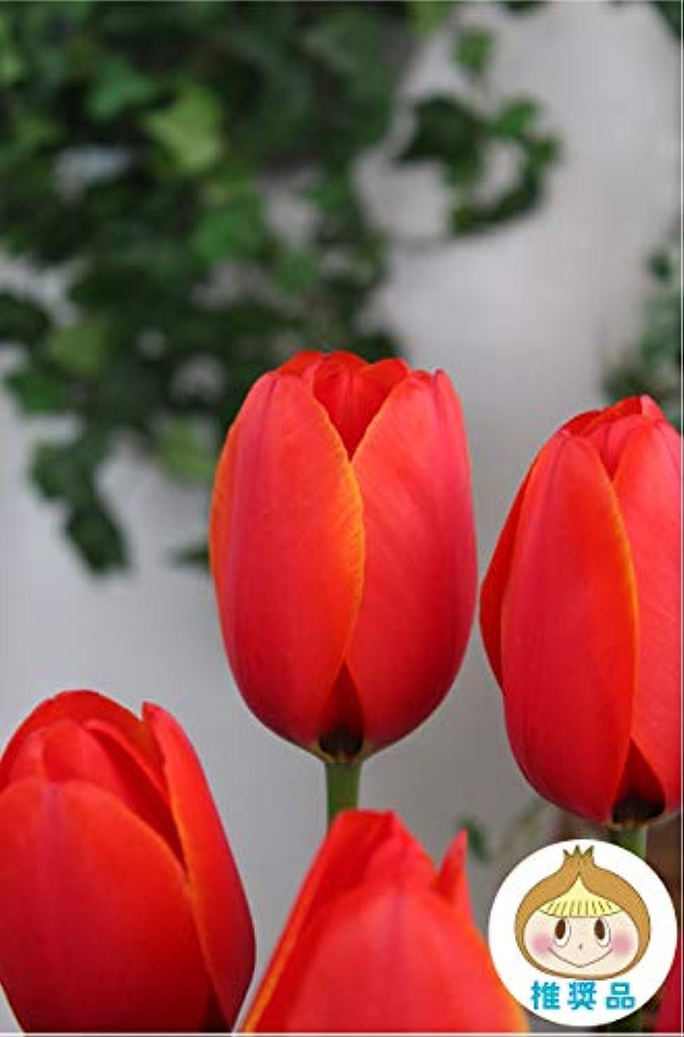 男スカリーリードはなみどり 秋植え! 良質国産香りチューリップ ワールドフェボリート 20球 球根