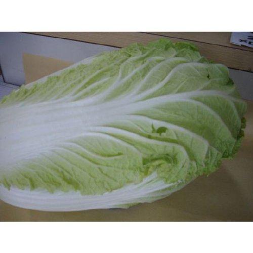 福知山 福知山産白菜