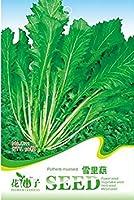 PLAT会社-SEEDSグリーンPotherbマスタードオーガニック中国のザウアークラウト野菜種子、オリジナルパック、50個の種子/パック、グレートコールドディッシュ種子C111