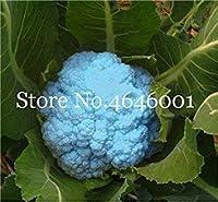 Sale! 100 Pcs Broccoli Bonsai Vegetable Bonsai 95%+ Germination Non-GMO Heirloom Vegetable Bonsai for Home Garden: 18
