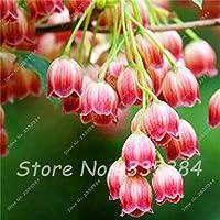 9:谷間Convallaria Majalis多年生の花の種、プロフェッショナルパック、50種子/パック、非常に美しいの珍しいカラフルなユリ