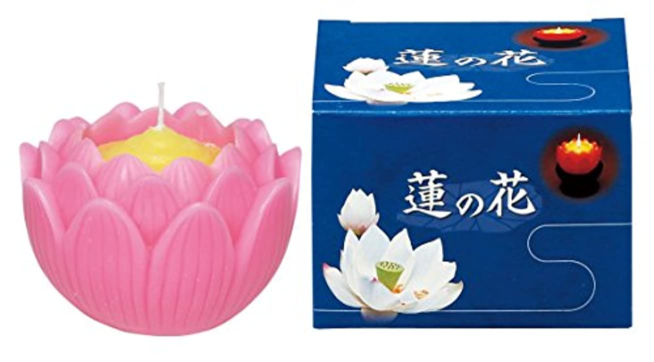 マルエス ろうそく 蓮の花 大 ピンク 箱入