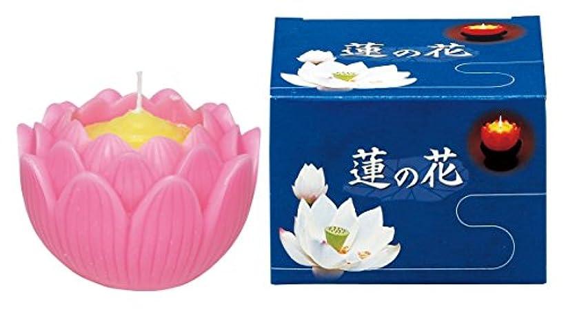 万一に備えて起きる気性マルエス ろうそく 蓮の花 大 ピンク 箱入
