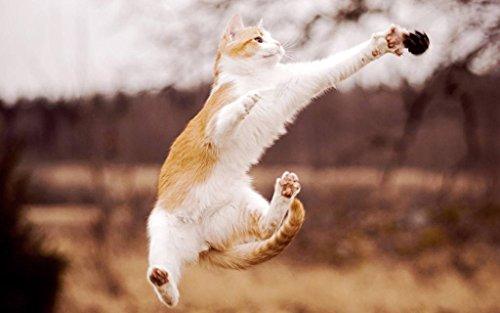猫美しいジャンプ キャンバスの 写真 ポスター 印刷 動物 - (105cmx70cm)
