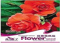 PLAT会社-SEEDS美しいフェアリイ奇妙な紅茶花インパチェンスの種子赤い美しい花の種の多くの品種の美しい花の種シードE
