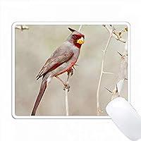 Pyrrhuloxia、Cardinalis cardinalis、男性Starr、Texas、USA。 PC Mouse Pad パソコン マウスパッド