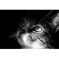子猫動物 - #30179 - キャンバス印刷アートポスター 写真 部屋インテリア絵画 ポスター 90cmx60cm