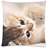 可愛い 子供 かわいさの猫さん 座布団 45cm×45cm