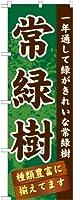 常緑樹 のぼり GNB-1074