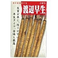 ごぼう 種 【渡辺早生】 小袋(約10ml)