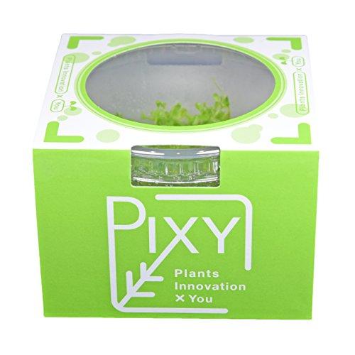 PIXY 組織培養水草ロタラsp.ベトナム Hra (無農薬 無菌 無害虫)