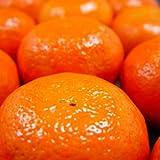 愛媛県産 高級柑橘 アンコール 1kg