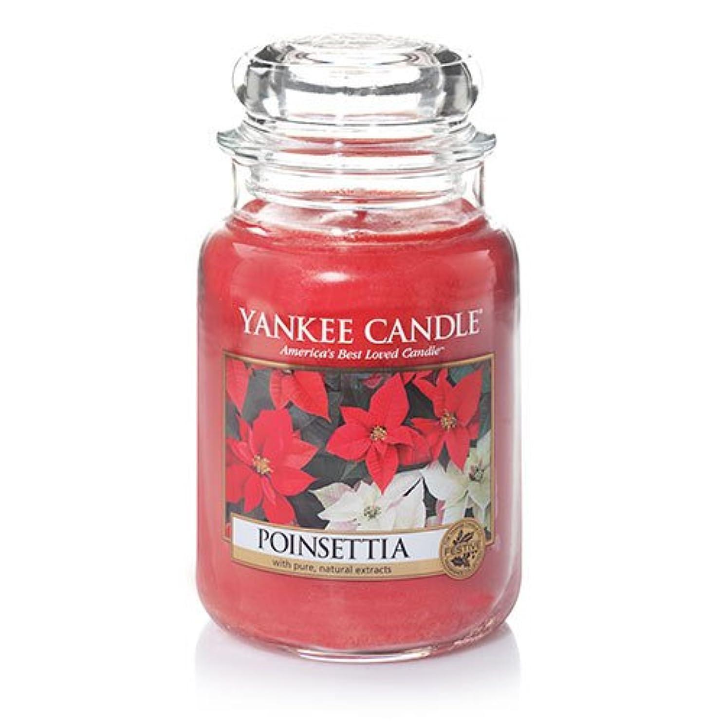 最後に単調な背景YankeeキャンドルポインセチアLarge Jar Candle、新鮮な香り