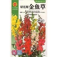 切花用金魚草 (春、秋まき) (716)