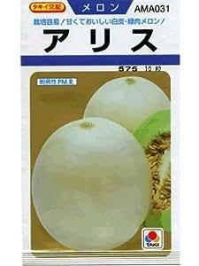 メロン タキイ交配 アリス タキイのノーネットメロン種です
