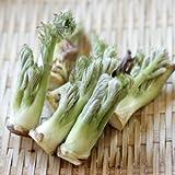 [ 山菜 ] タラノキ 3.5寸ポット