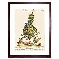 Painting Nature Animal Bird Leitner Parakeet Two Framed Wall Art Print