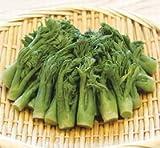 【季節限定:春食材】山福)たらの芽Sスタンドパック 500g (約90本入)<2-5月>