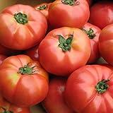 トマト 訳あり 北海道とまと 桃太郎8kg