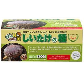 椎茸種駒 【しいたけ種駒800個】