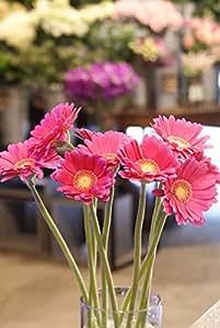 箱買い 一級品のガーベラ(ピンク系) 誕生日・記念日・卒業・送別・各種お祝い