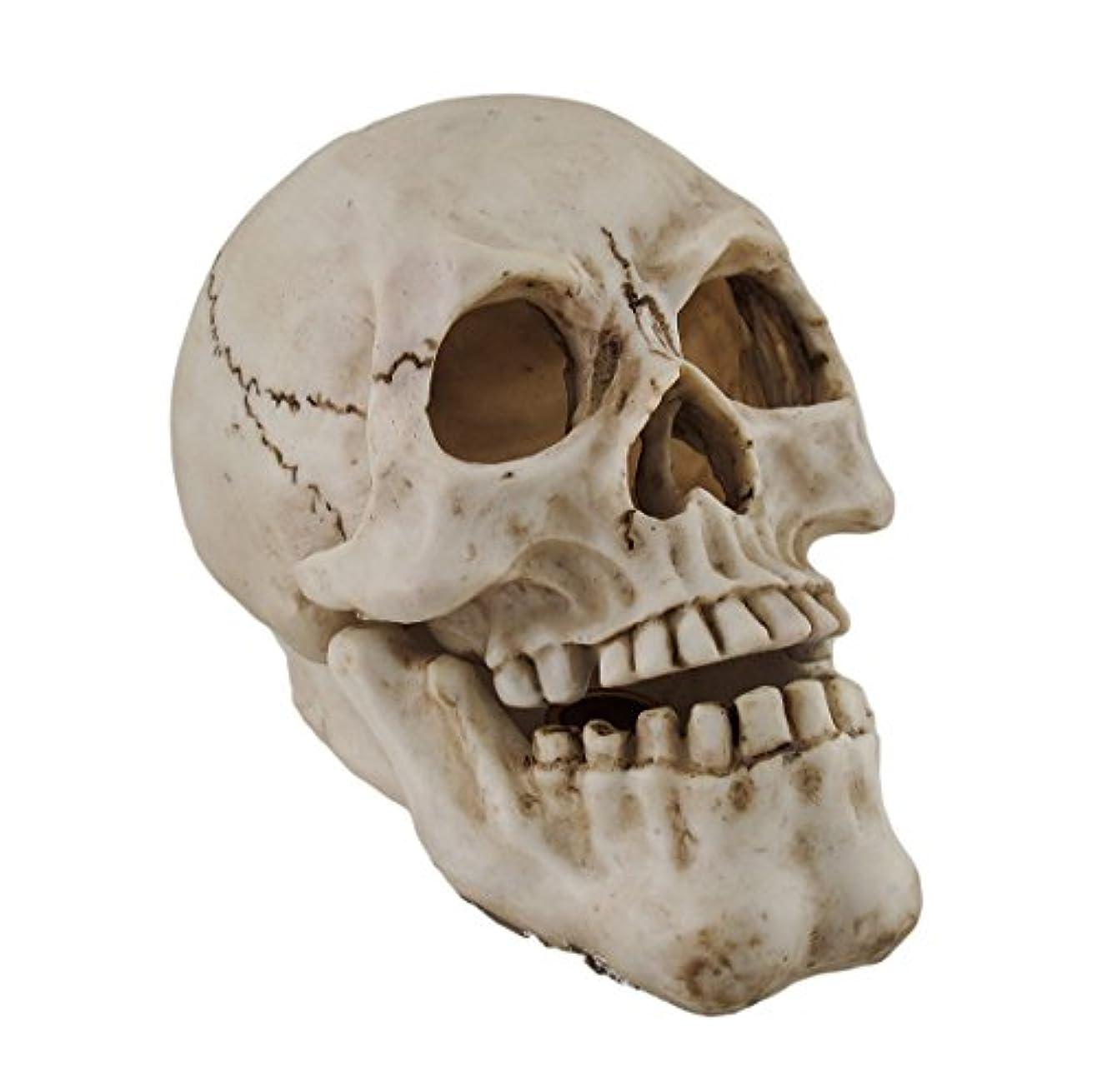社会科費用出します樹脂IncenseホルダーHuman Skull Shaped Incense Burnerボックス7.75 X 5.75 X 4.5インチホワイトモデル# pwh-63