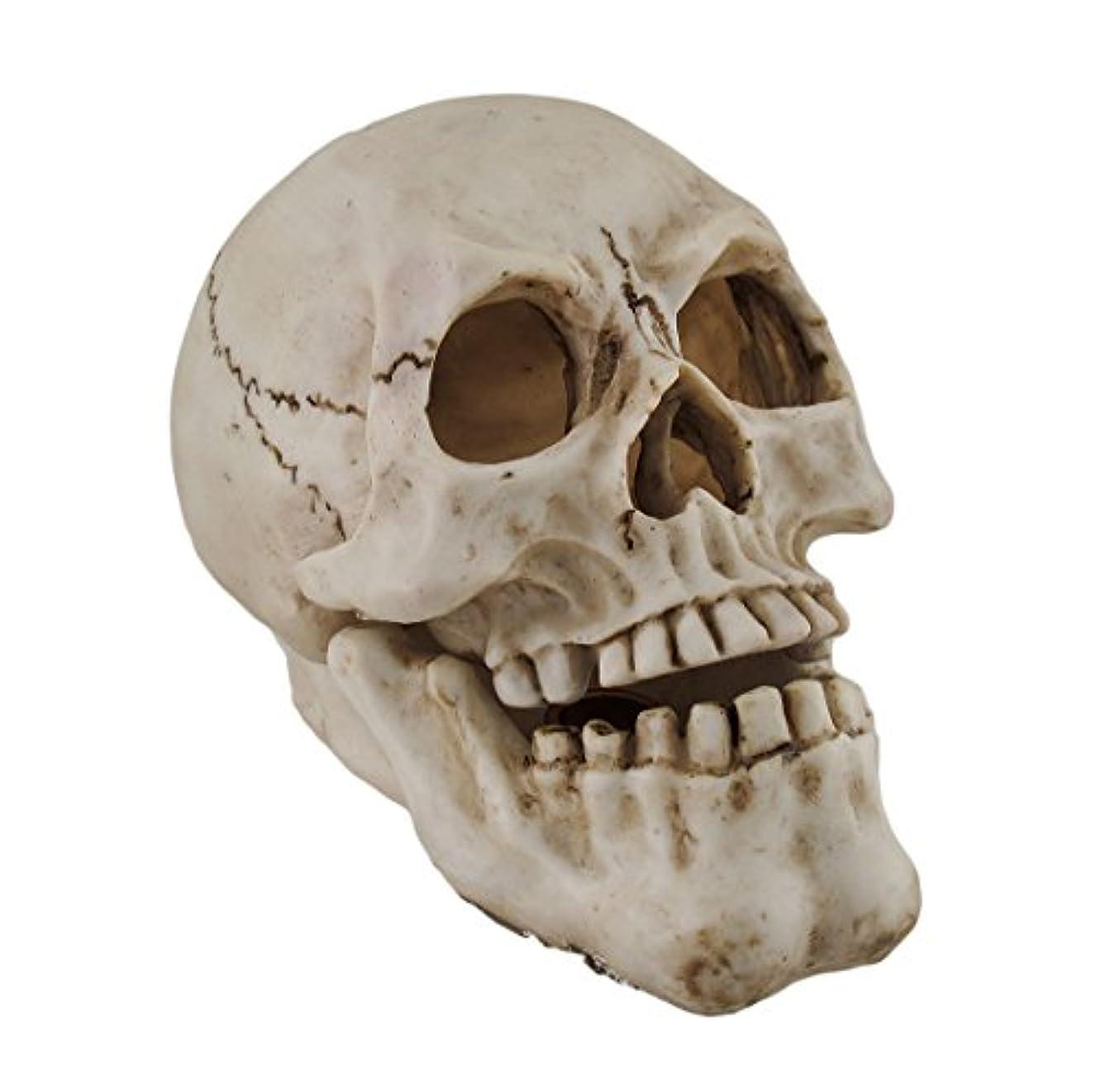 名目上の吹きさらし愛撫樹脂IncenseホルダーHuman Skull Shaped Incense Burnerボックス7.75 X 5.75 X 4.5インチホワイトモデル# pwh-63