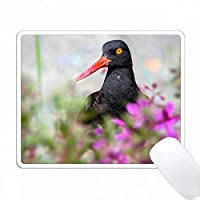 アメリカ、アラスカ、グレイシャーベイNP。ブラックオイスターキャッチャーの鳥と花。 PC Mouse Pad パソコン マウスパッド