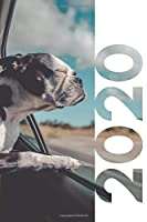 2020: Frenchie rescue Texas Practical Planner Calendar Organizer Daily Weekly Monthly Student Diary for notes on what to look for when buying a french bulldog puppy