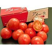 わけあり・訳あり 静岡・長野産 アメーラトマト 1箱 2L~3Sサイズ 約900g  ※冷蔵