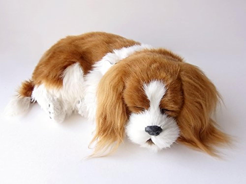 本物そっくりに眠る犬のぬいぐるみ|パーフェクトペット|キャバリア