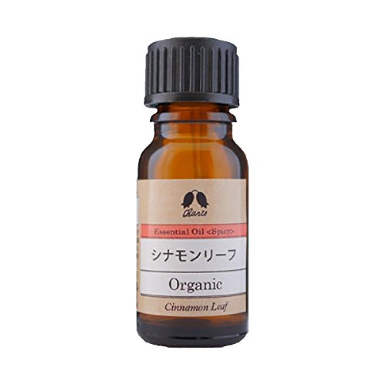 薄汚い前投薬ベテランカリス エッセンシャルオイル シナモンリーフ オーガニック オイル 10ml