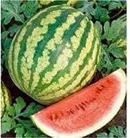種子パッケージ:ENVIDESO:pkgのあたりWatern、クロンダイクストライプリボンシード、オーガニック、ノンGMO、25