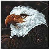 The Hawk Is Howling 画像