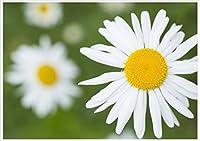 ポストカード春の花5種類セット1