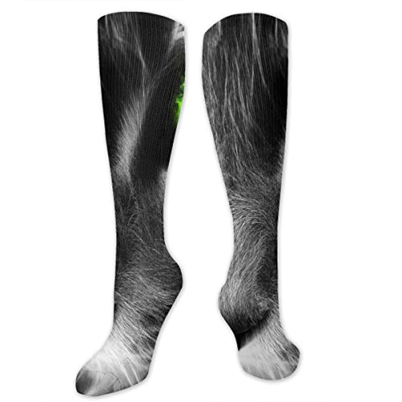 レパートリー血まみれのマイナーレディースFunny Casual Socks - コットングレーキャットアスレチックソックス