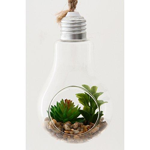 ガラス多肉植物 電球瓶 A 蓋付き 商品コード:56412 不二貿易
