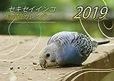 セキセイインコ・鳥写真カレンダー 2019 (A5サイズ。ワンタッチで卓上にも壁掛けにもなる3Wayカレンダー)