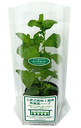 土耕式植物工場産無農薬ハーブ スペアミント 7.5cmポット 2本植え