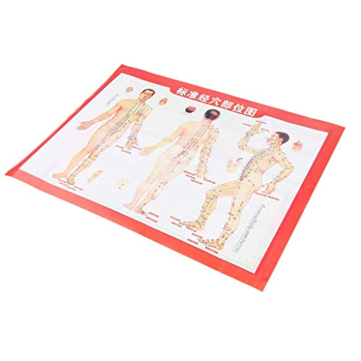 まっすぐ悲劇的なコマンド鍼灸 経絡 経穴図 ポスター 人体チャート 人体図 実用的 zhangs shop