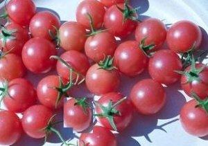 ピンクチェリー ミニトマト 6粒