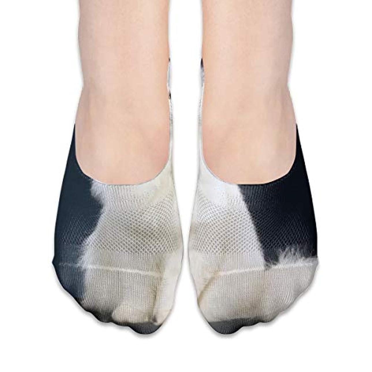 画家含む虫を数える女性のかわいい白猫ローカットコットンボート隠し目に見えない靴下