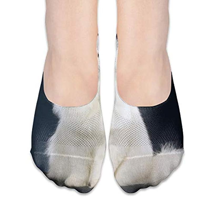 溶ける爆発物非互換女性のかわいい白猫ローカットコットンボート隠し目に見えない靴下