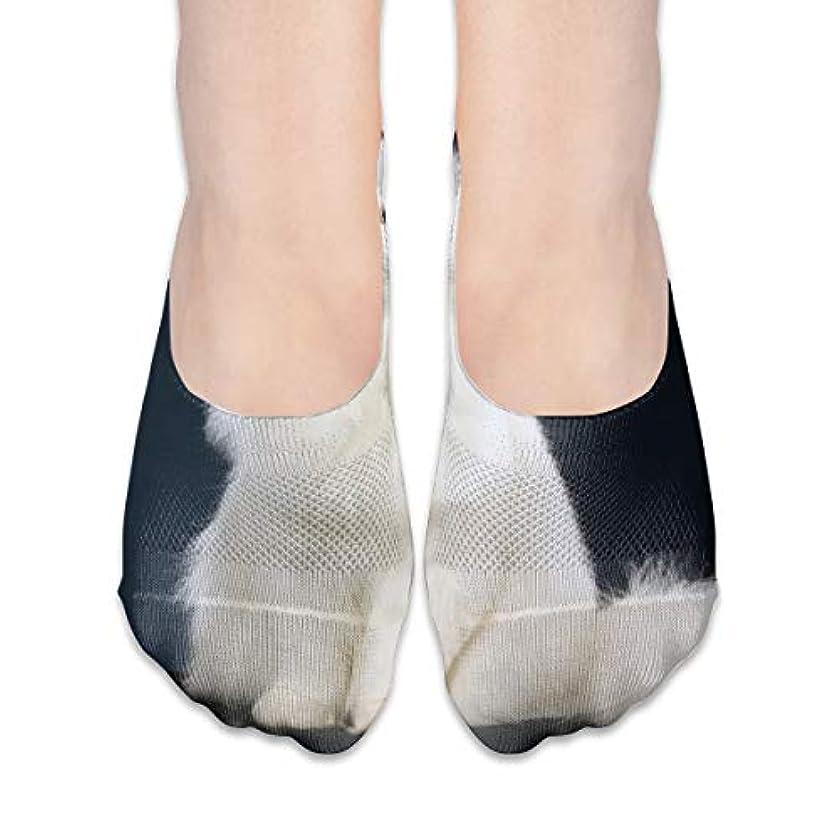 タッチ損失モディッシュ女性のかわいい白猫ローカットコットンボート隠し目に見えない靴下
