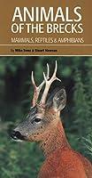 Animals of the Brecks: Mammals, Reptiles & Amphibians