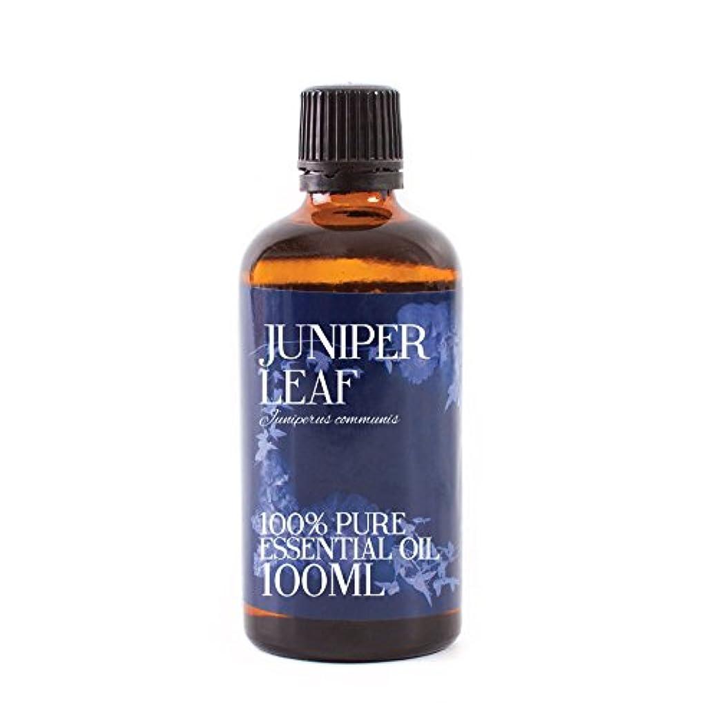 音楽を聴く遺棄された銀Mystic Moments | Juniper Leaf Essential Oil - 100ml - 100% Pure