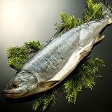 極太一本新巻鮭(雄2.5?3.0kg前後) 北海道