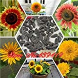 50個の小人ヒマワリの種真のミニヒマワリの種のオプションの様々な屋内装飾用の花