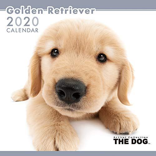 アーリスト 2020 THE DOG カレンダー ゴールデンレトリーバー