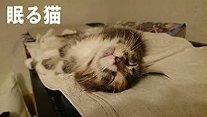 子猫の眠る姿にゴロゴロ変わる寝相。リラックスしきった表情が癒してくれる猫写真集。世界で一番大きくなるイエネコと言われるメインクーン。メインクーンの子猫 エマが眠る姿。(ときどきイタズラ)どんな夢を見てるか分からないけど、きっと幸せに違いない。優しい気持ちにしてくれる寝顔。全165P